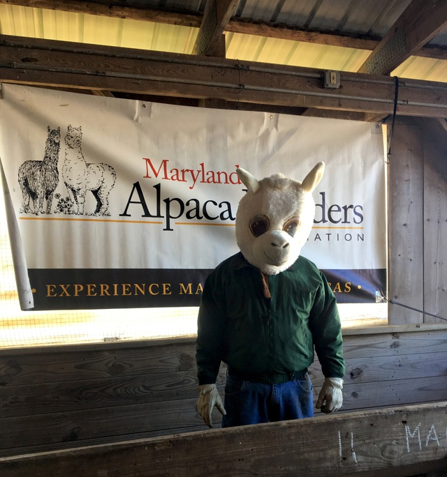 That's a funny lookin' alpaca!