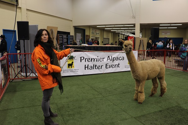 Canadian Western Agribition Welcomes Alpaca's