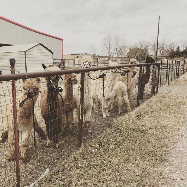 new herd