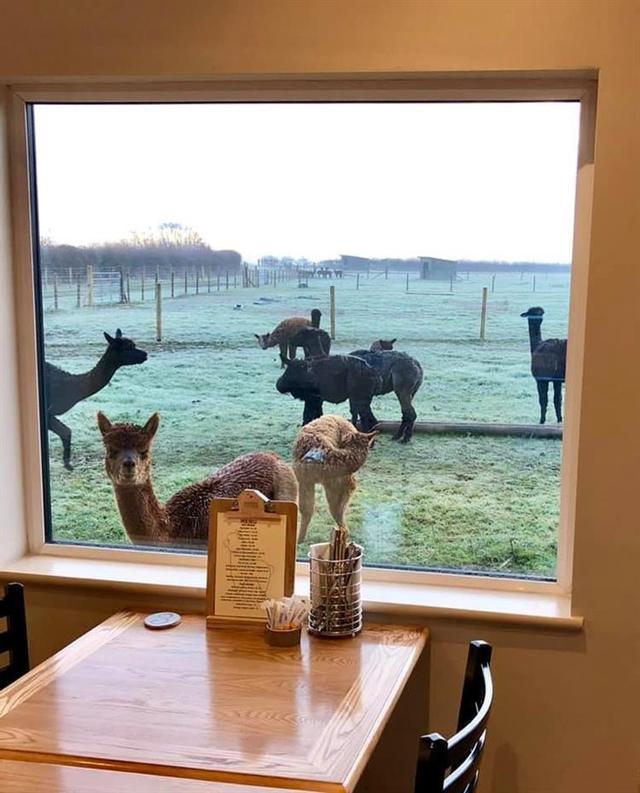 Farming family opens alpaca centre in Dry Doddington