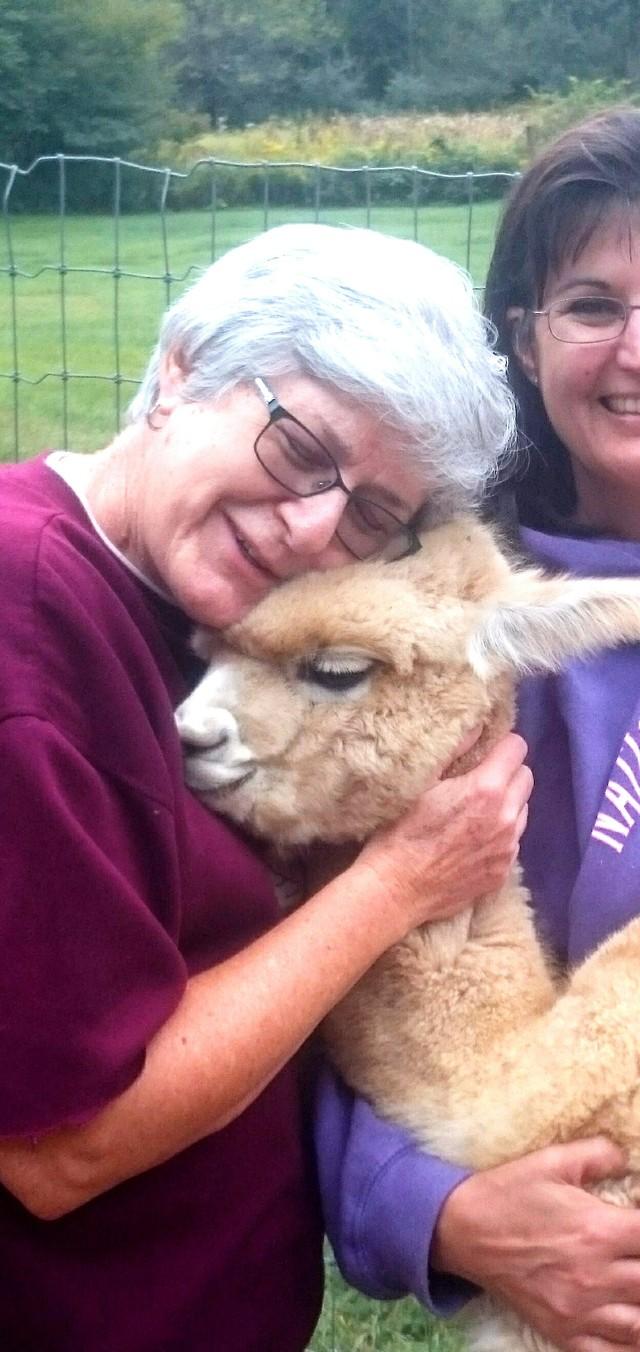 Openherd: Pine Valley Alpacas is Alpaca farm located in ...