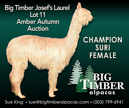 2019 Amber Autumn Auction
