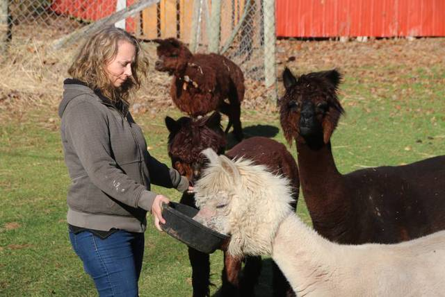 Do your alpaca research before bringing them home: Middle Stewiacke herd owner
