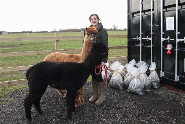 J. and J. Alpacas at Dry Doddington offers bag of alpaca dung for Teenage Cancer Trust