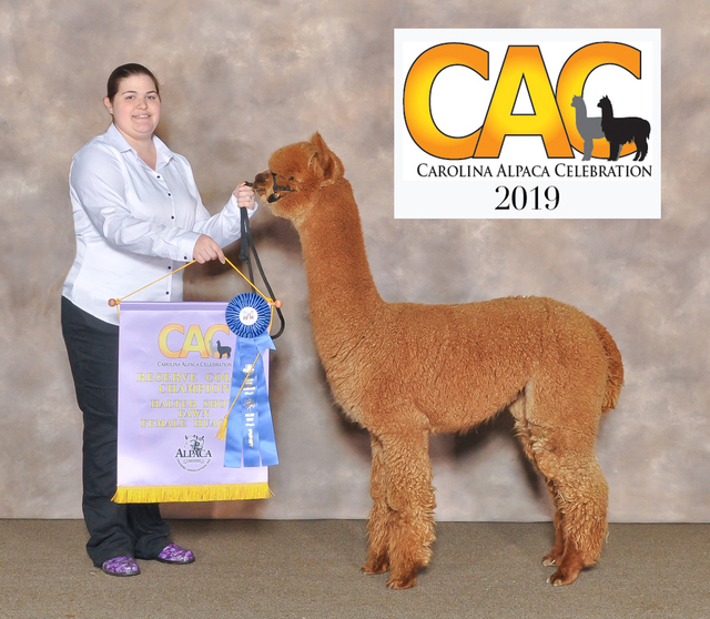 J CREEK UP TOWN GIRL:  Fawn Female Reserve Champion