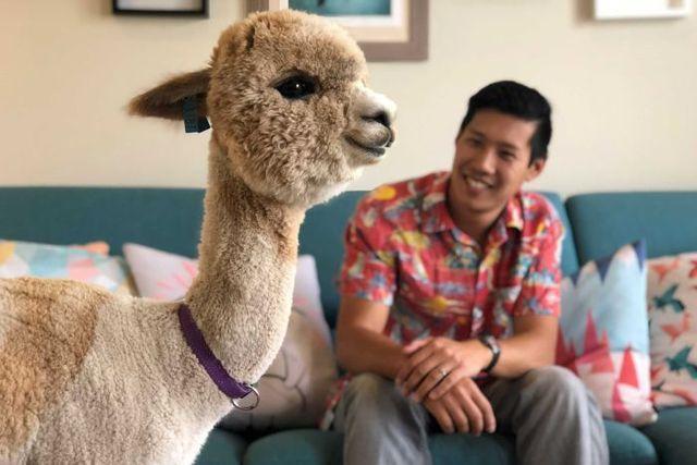 Alfie the pet alpaca becomes an overnight Instagram sensation after video goes viral