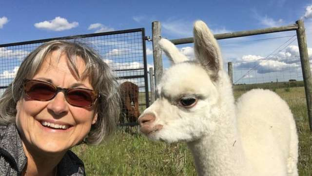 An 'alpacalypse' of adorable: Why everyone from millennials to seniors are flocking to Sask. alpaca farms
