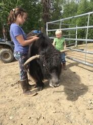 The G-kids giving Grandma Yak a brushing