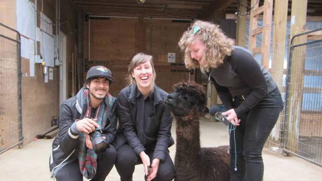 Alpaca My Bags visit