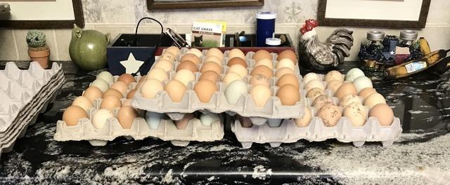 30 egg flat