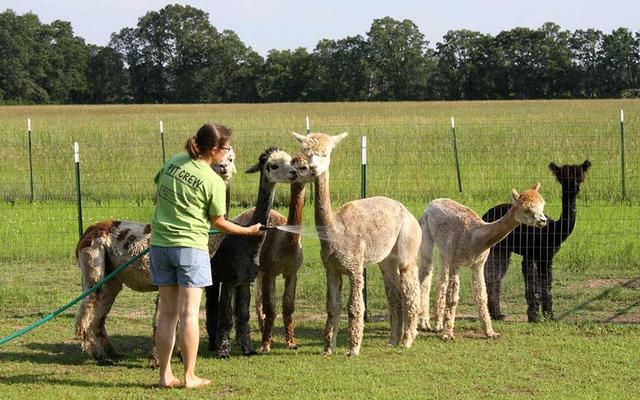 United Way 'Llama Llama' event to celebrate children's books