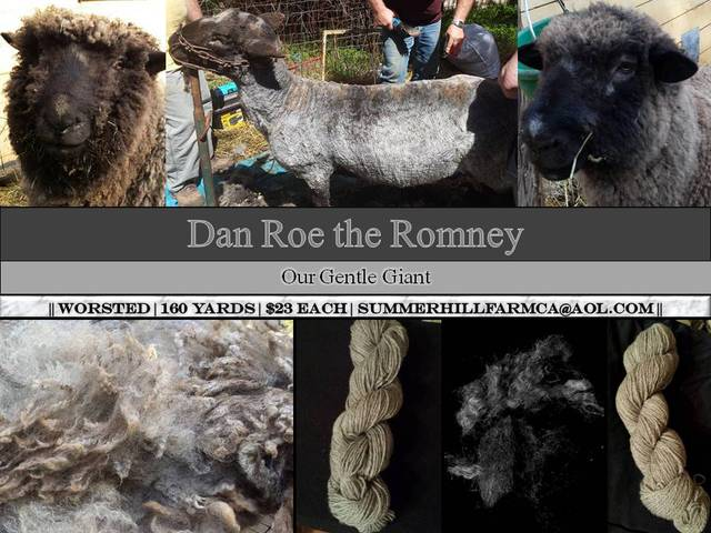 Dan Roe