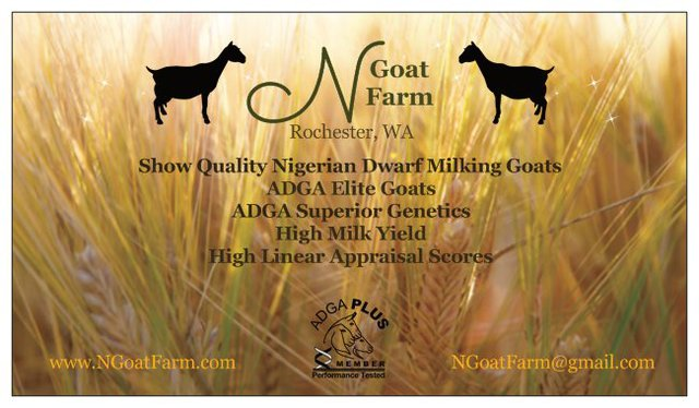 Goatzz N Goatfarm Is Show High Milk Yield Adga Sg Elite Nigerian Dwarf Goats Washington Located In Rochester Washington Owned By N Goatfarm Show High Milk Yield Adga Sg Elite Nigerian Dwarf