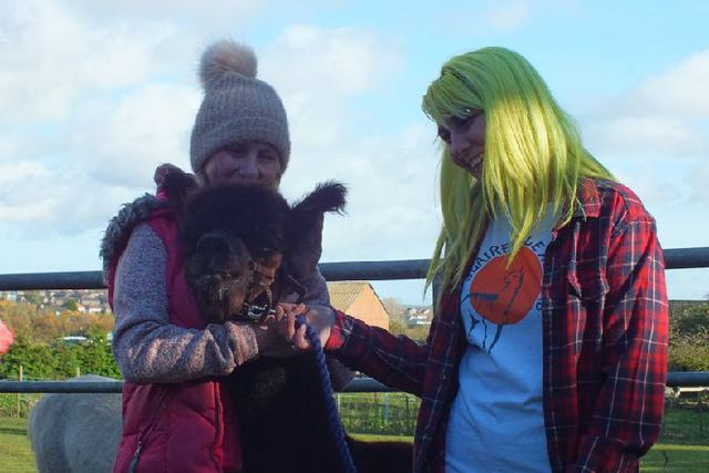 Alpaca from Fife farm could visit local care homes