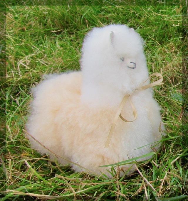 Oops!  My alpaca shrank!