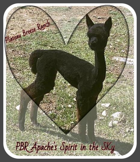 PBR Apache's Spirit in the Sky