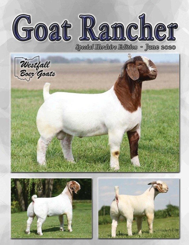Featured in the June issue of Goat Rancher (pages 26-28).