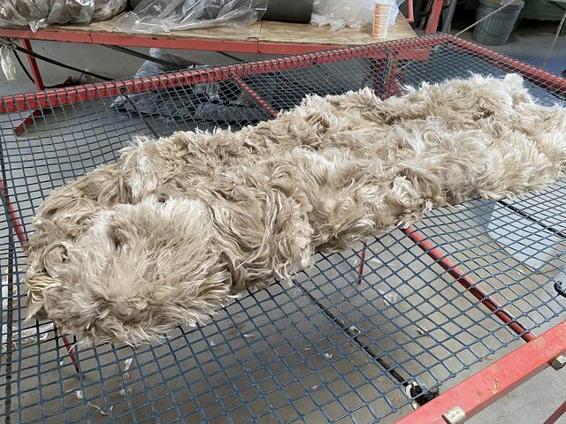 Kalino's show fleece