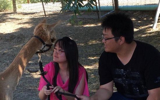 Alpacas are curious and perfectly safe to be with.