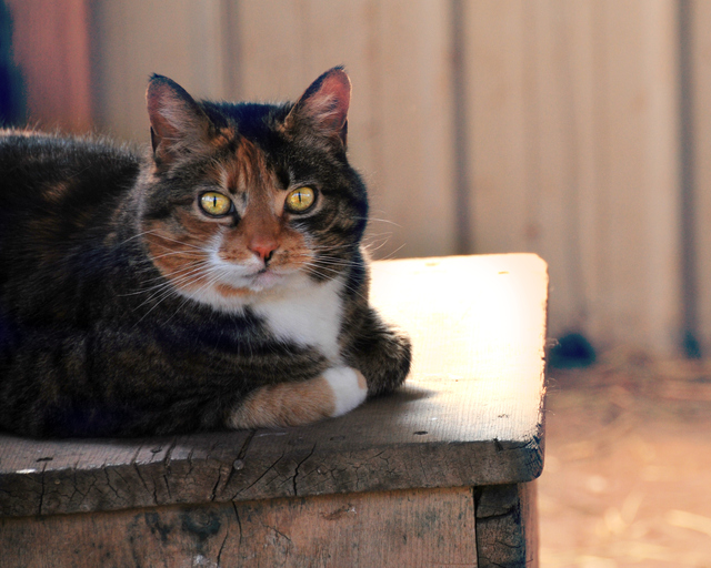 Our Barn Cat Lilly!