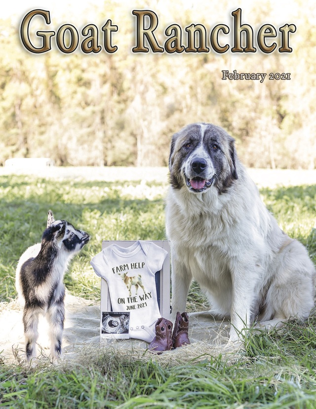 Featured in the February issue of Goat Rancher (page 18-20).