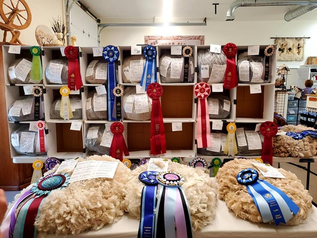 NW Alpaca Showcase Fleece Show 2021 Winners!