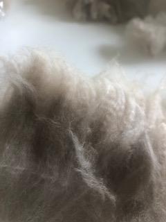 Section of Raw Fleece