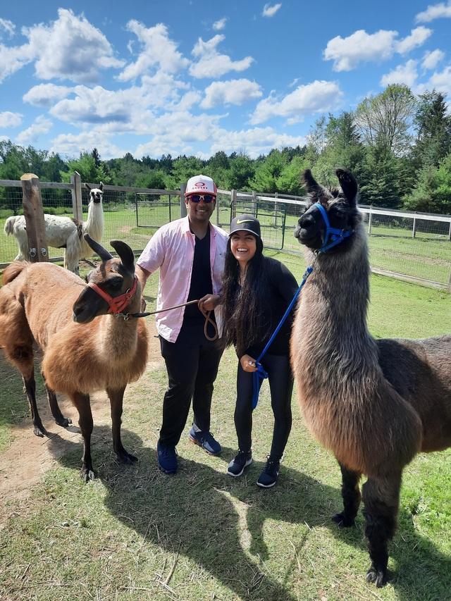 Returning for a very enjoyable July 2021 Post-Covid Lockdown llama walk!