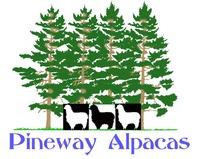 Pineway Alpacas - Logo