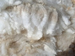 Photo of Fiber Skirting