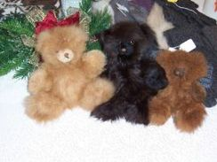 Photo of Alpaca Teddy Bears