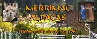 Merrimac Alpacas - Logo