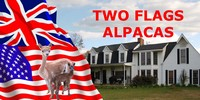 Two Flags Alpacas - Logo