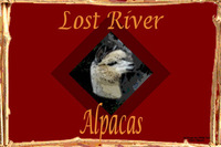 Lost River Alpacas - Logo