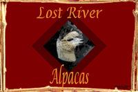 Lost River Alpacas - Logo