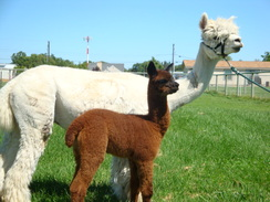 Mom with New Cria!