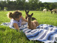 Fiona as a cria