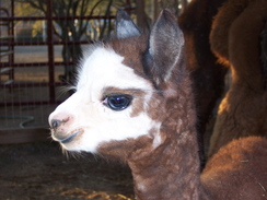 Graycee Spirit at 6 days old