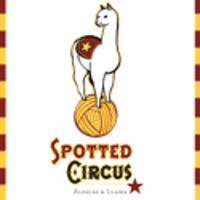 Spottedcircus Alpacas & Llama - Logo