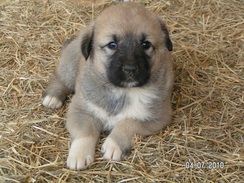 Puppy from Sadie's 1st litter