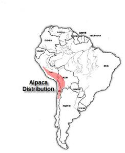 Where Alpacas Originate