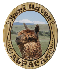 SURI HAVEN ALPACAS - Logo