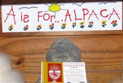 'A is for... Alpaca' Bumper Sticker