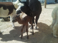 Val and new cria boy
