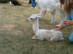 September 2006, Gabrielle, minutes old, lured us in.