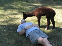 August 2010, Aeron and his sleeping 2-legged.