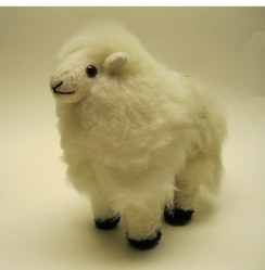 Photo of Standing Lamb