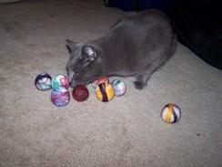 Cat Nip Cat Toy