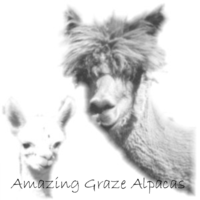 Amazing Graze Alpacas - Logo