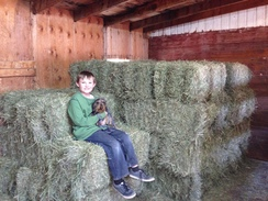 Ryan and Blu enjoying a new seat in the barn